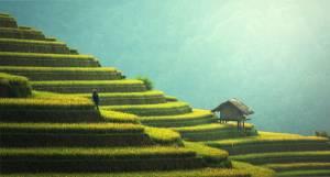 Agriculture Azië