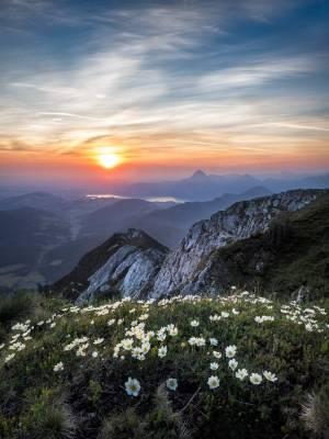 Bloemen boven op de berg