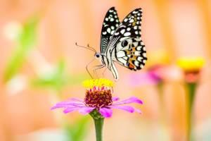 Vlinder op bloem tuindoek
